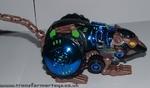 blue-tm-rattrap-011.jpg