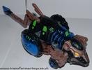 blue-tm-rattrap-014.jpg