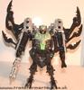tm-silver-tarantulas-001.jpg