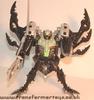 tm-silver-tarantulas-003.jpg