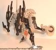 tm-silver-tarantulas-005.jpg