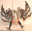 tm-silver-tarantulas-006.jpg