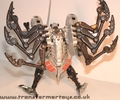 tm-silver-tarantulas-007.jpg