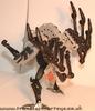 tm-silver-tarantulas-008.jpg