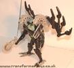 tm-silver-tarantulas-009.jpg