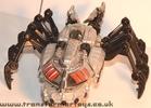 tm-silver-tarantulas-015.jpg