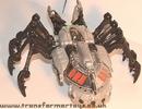tm-silver-tarantulas-016.jpg
