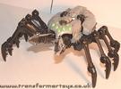 tm-silver-tarantulas-019.jpg