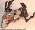 tm-silver-tarantulas-024.jpg