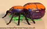 arachnid-005.jpg