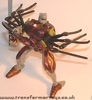 tarantulas-008.jpg