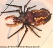 tarantulas-019.jpg