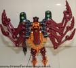 tarantulas-004.jpg