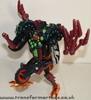 tarantulas-006.jpg