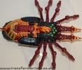 tarantulas-014.jpg