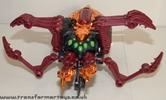 tarantulas-017.jpg