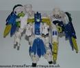 tigerhawk-006.jpg