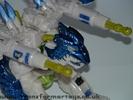tigerhawk-011.jpg