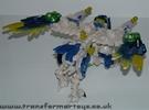 tigerhawk-013.jpg
