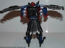 black-prowl-006.jpg