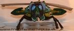 waspinator-014.jpg